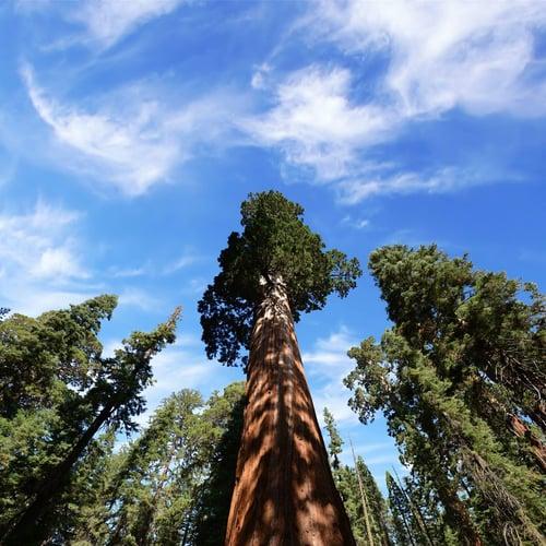 shs_sequoia_2-1_1-05417338~9